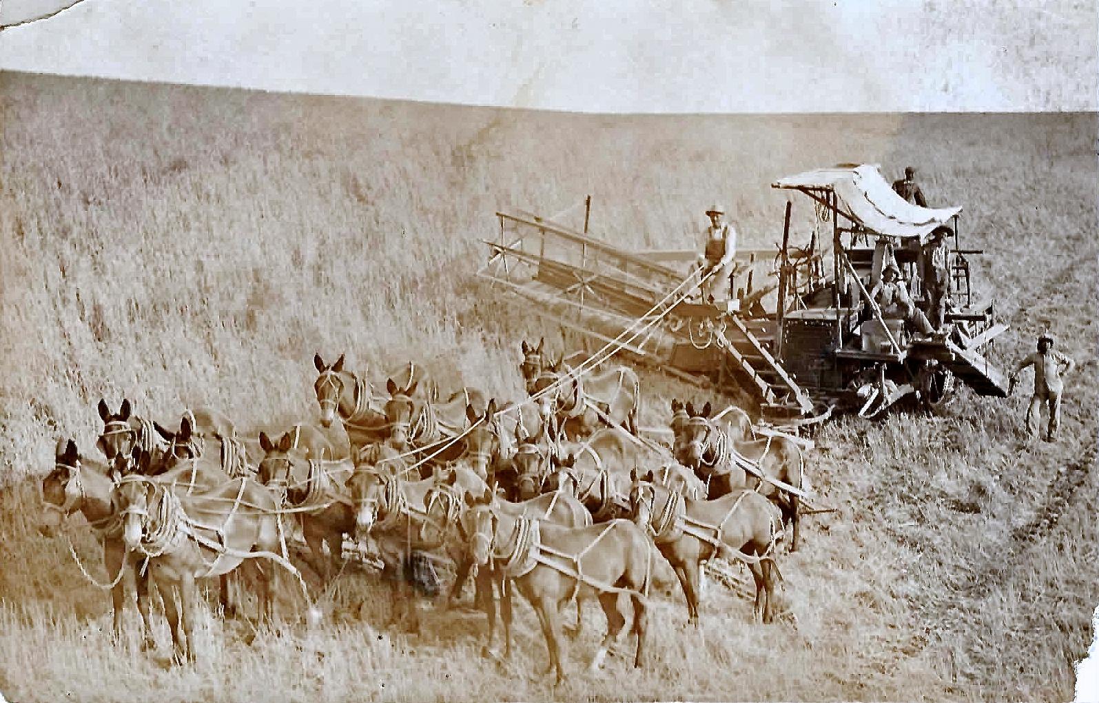 Mule team.jpg