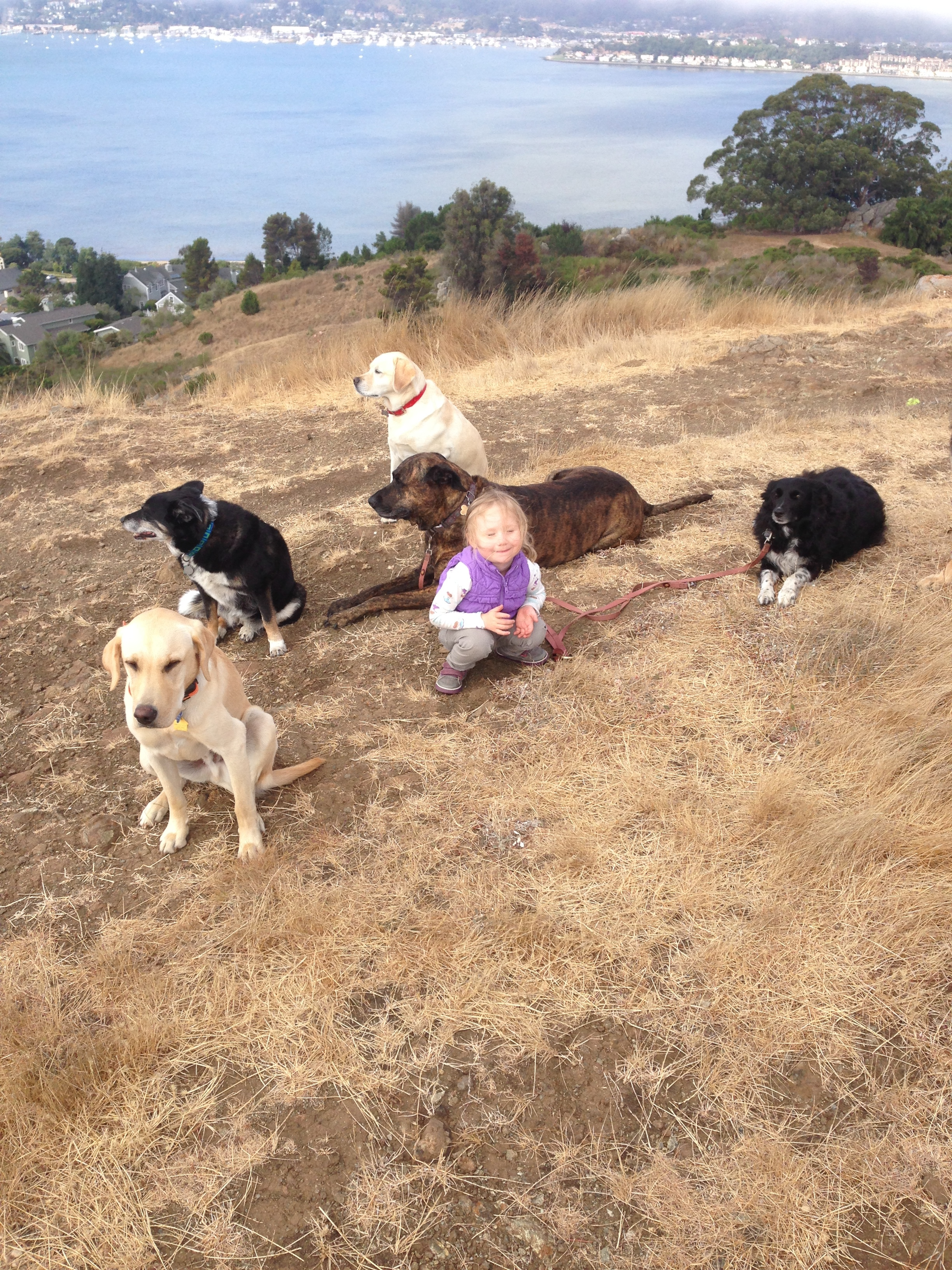Training dogs and training a child.