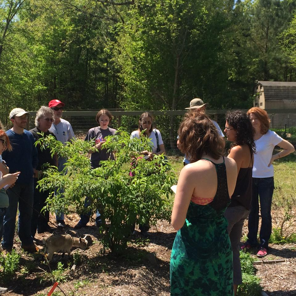 Plant Walks with Lindsay Wilson.