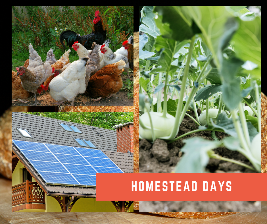 Homestead Days Image.png