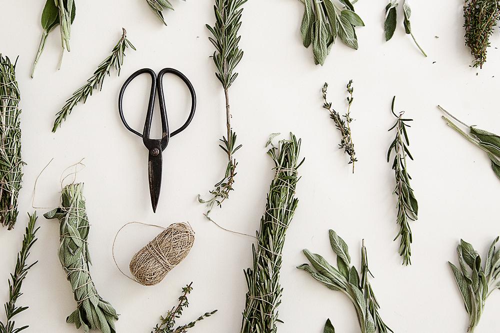 harvest_herbs.jpg