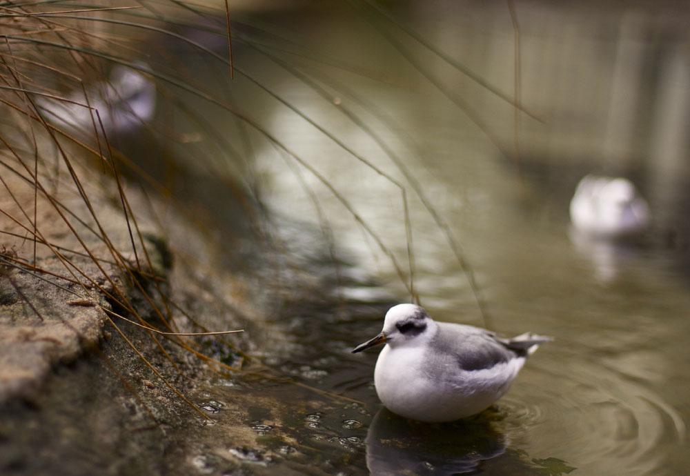 Photography_Birds.jpg