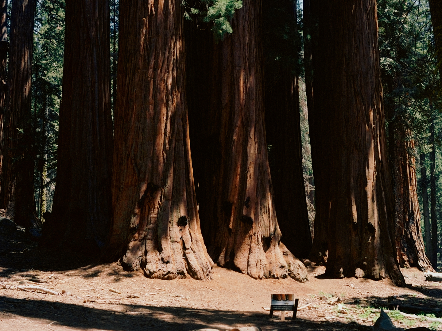 """The House,"" Sequoia National Park"