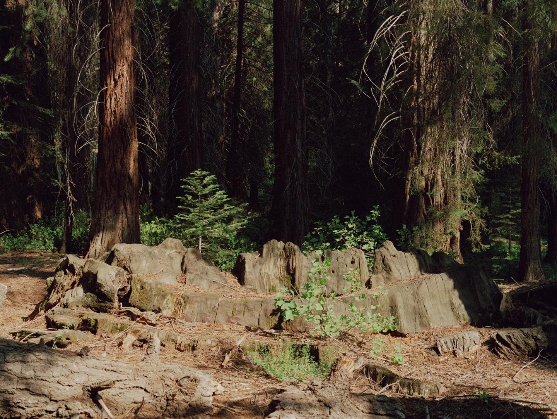 """Centennial Stump,"" Kings Canyon National Park"