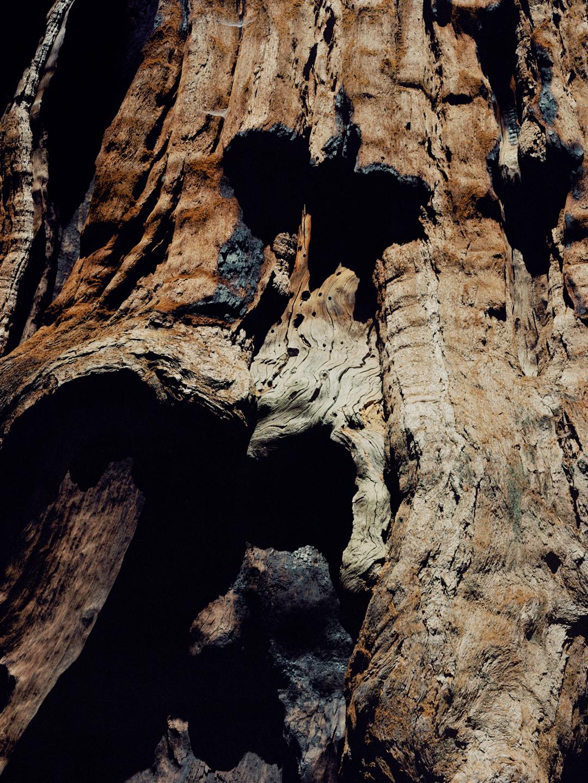Chief Sequoia, Sequoia National Park