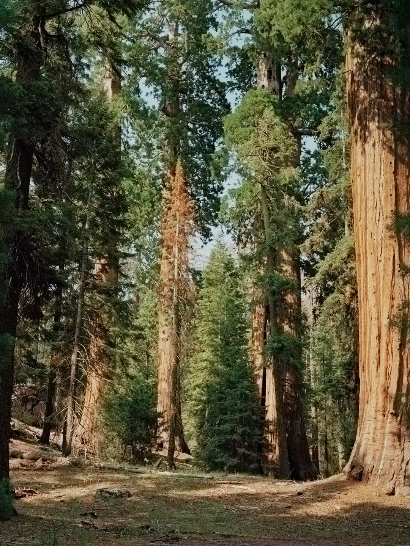 """Nevada,"" ""Iowa,"" and ""Missouri,"" Kings Canyon National Park"
