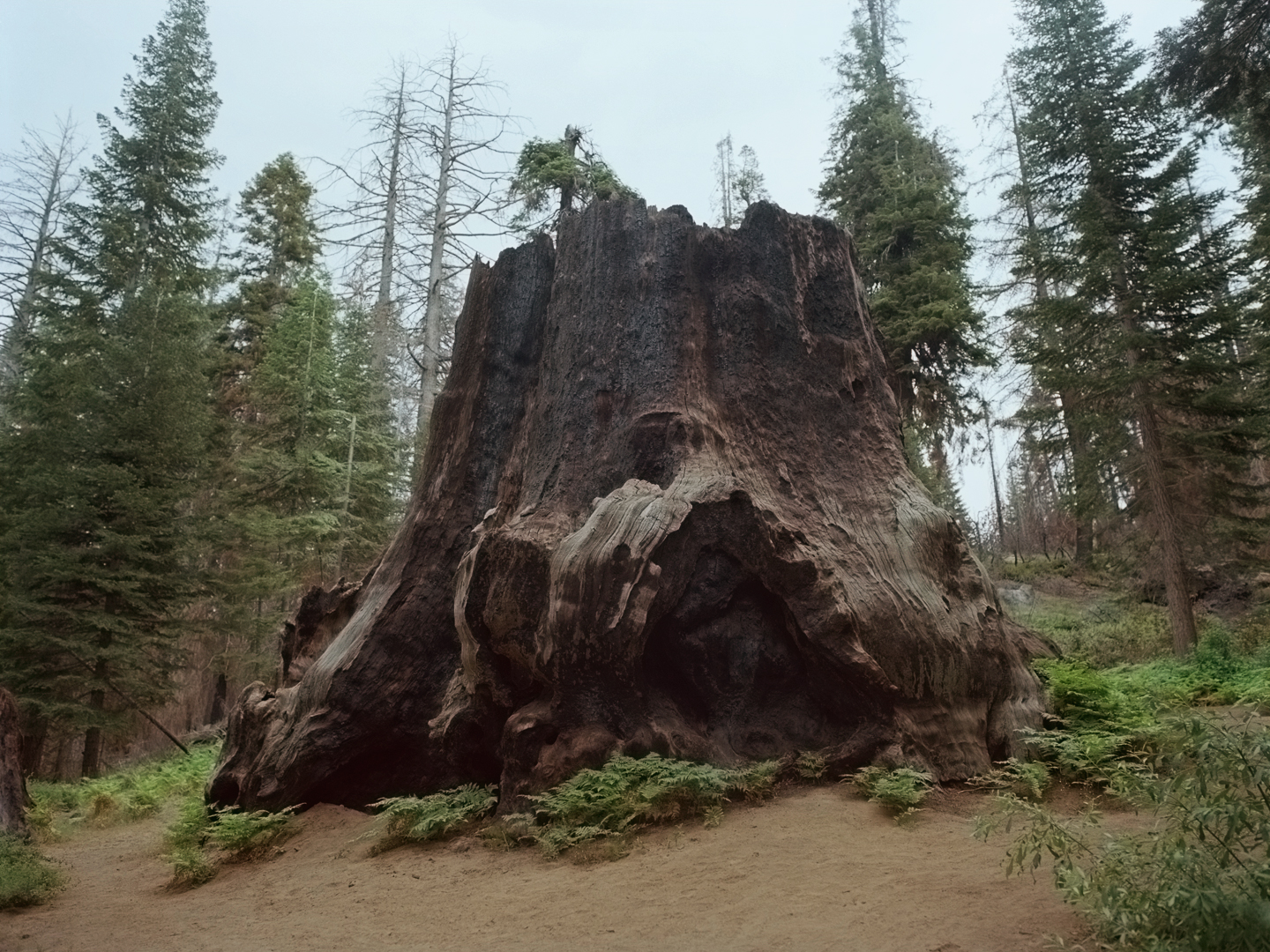 """Chicago Stump,"" Kings Canyon National Park"