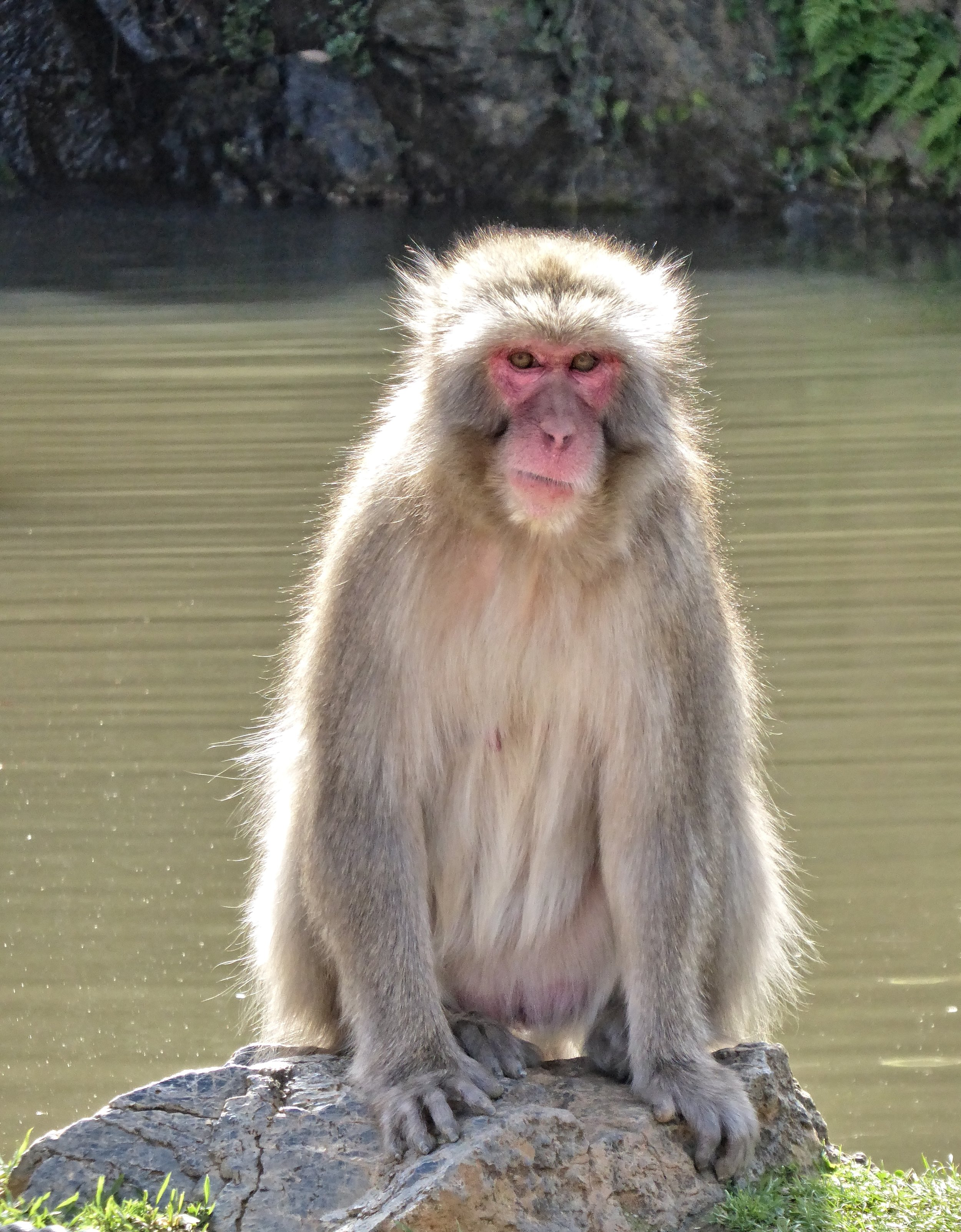 These snow monkeys were so adorable and we had an awesome afternoon hanging out with them.