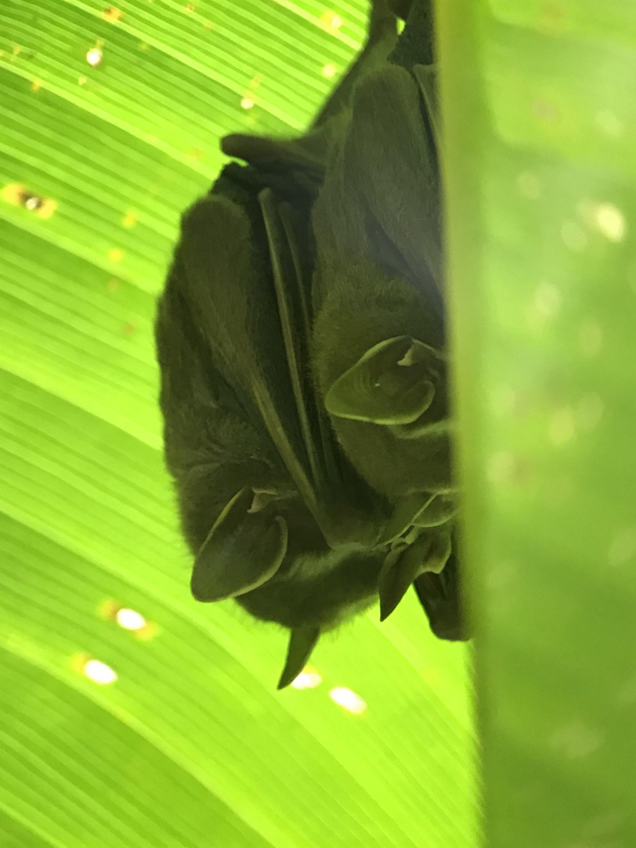 sleepy bats