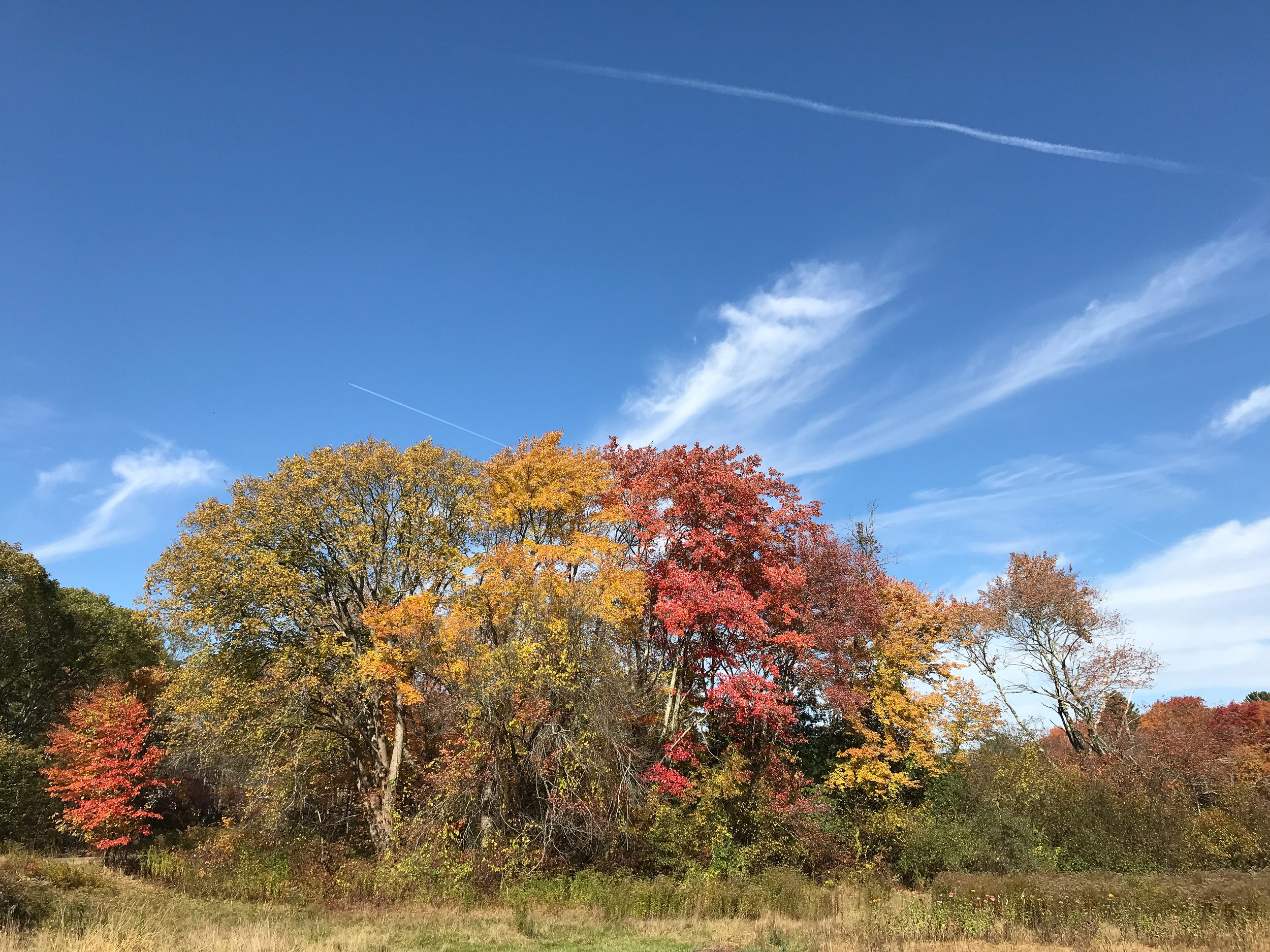 Medway Community Farm (Medway, Massachusetts)