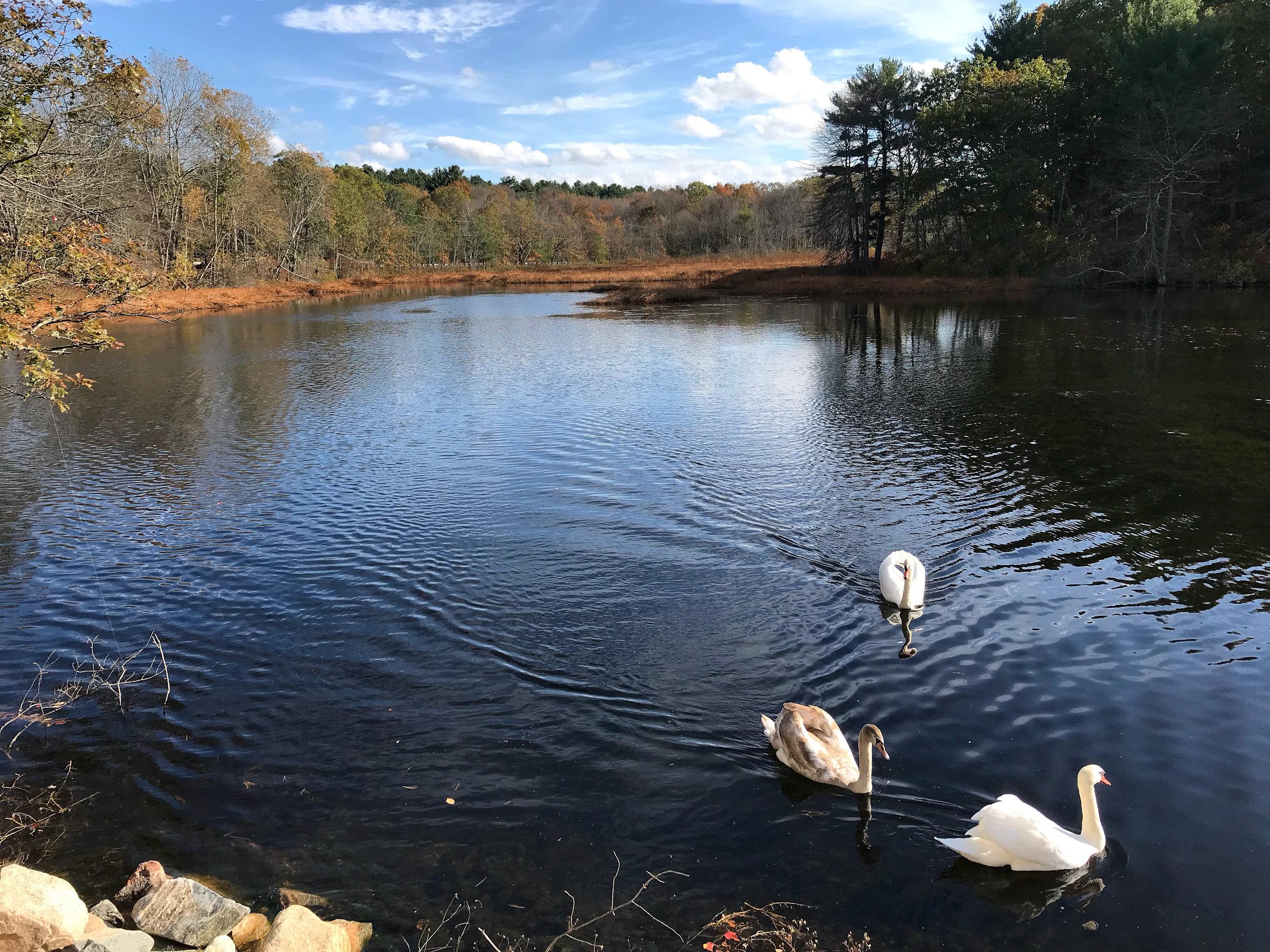 Bush Pond (Norfolk, Massachusetts)