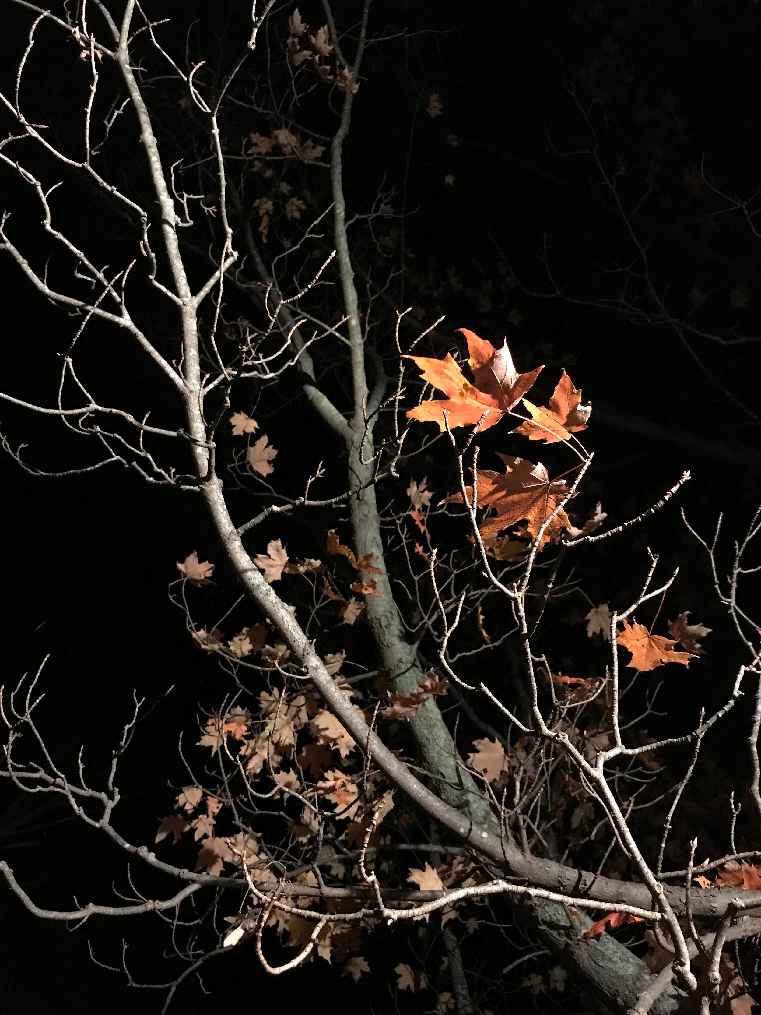 After Dark (Medway, Massachusetts)