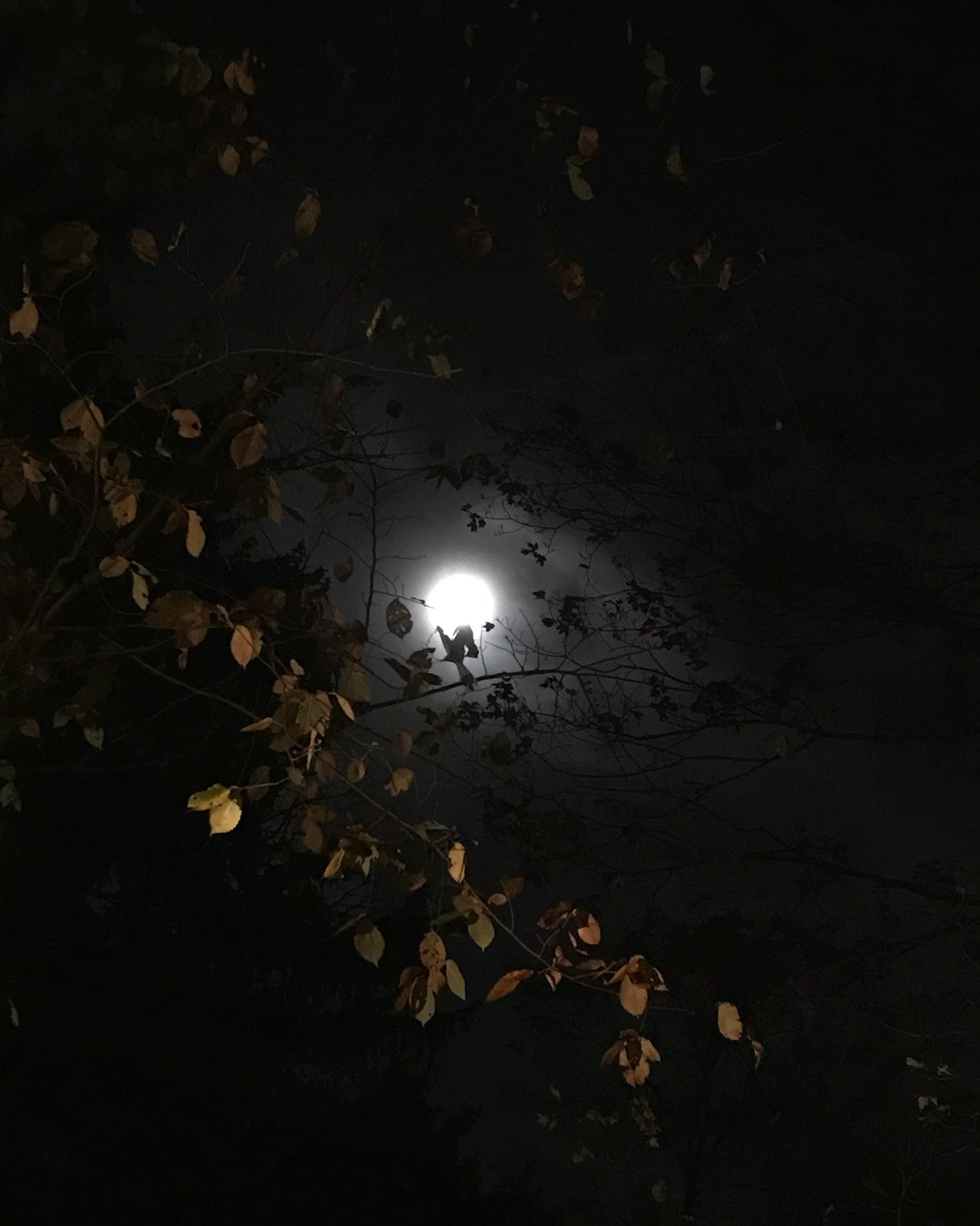Moonrise (Medway, Massachusetts)
