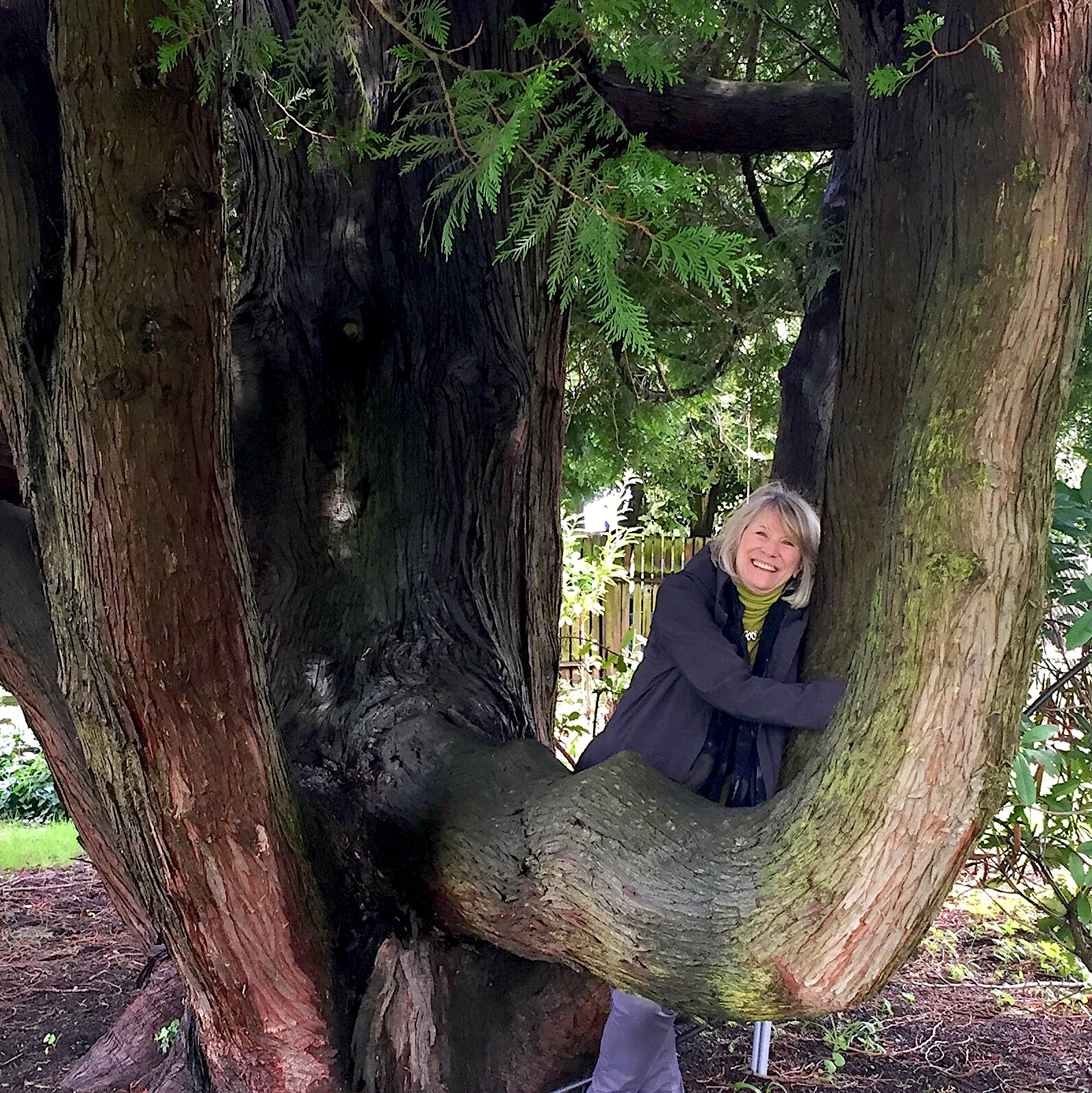 Loie Tree IG.jpg