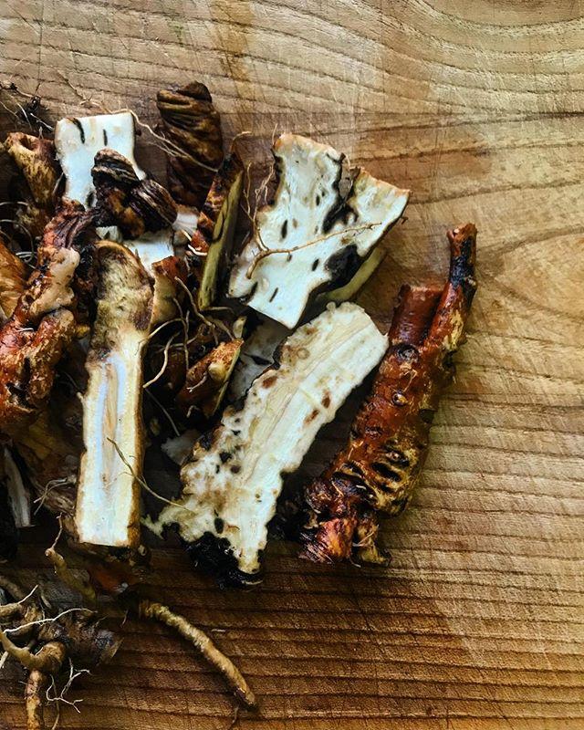 Prima maskrosrötter ska läggas på tork! #taraxacum