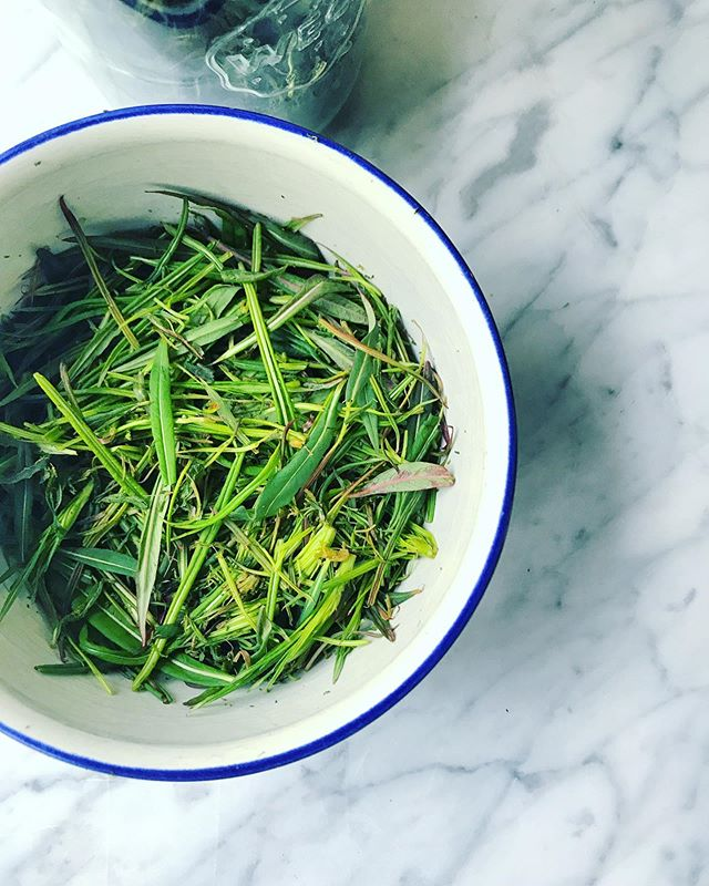 Årets första batch av te på mjölkörtsblad! Nu är de späda och fina. #epilobiumangustifolium