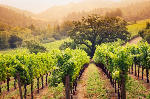 Napa vineyards