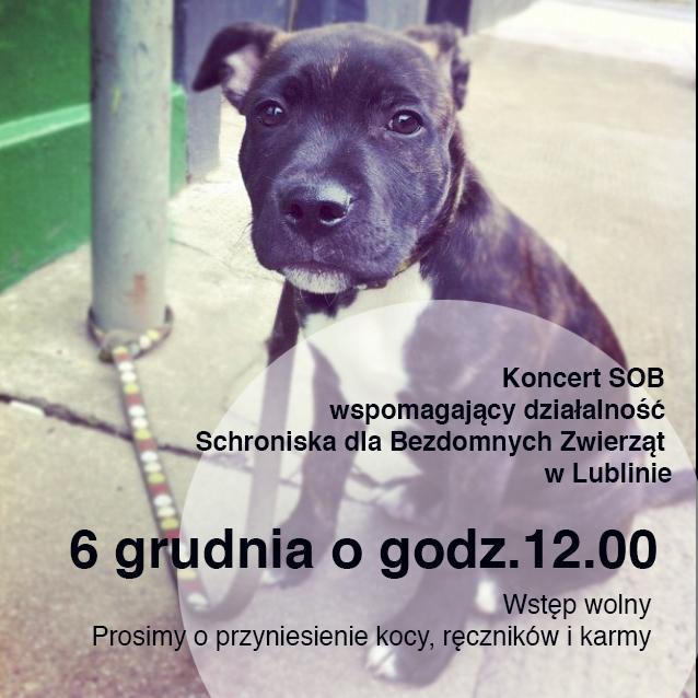 Koncert dla Schroniska w Lublinie