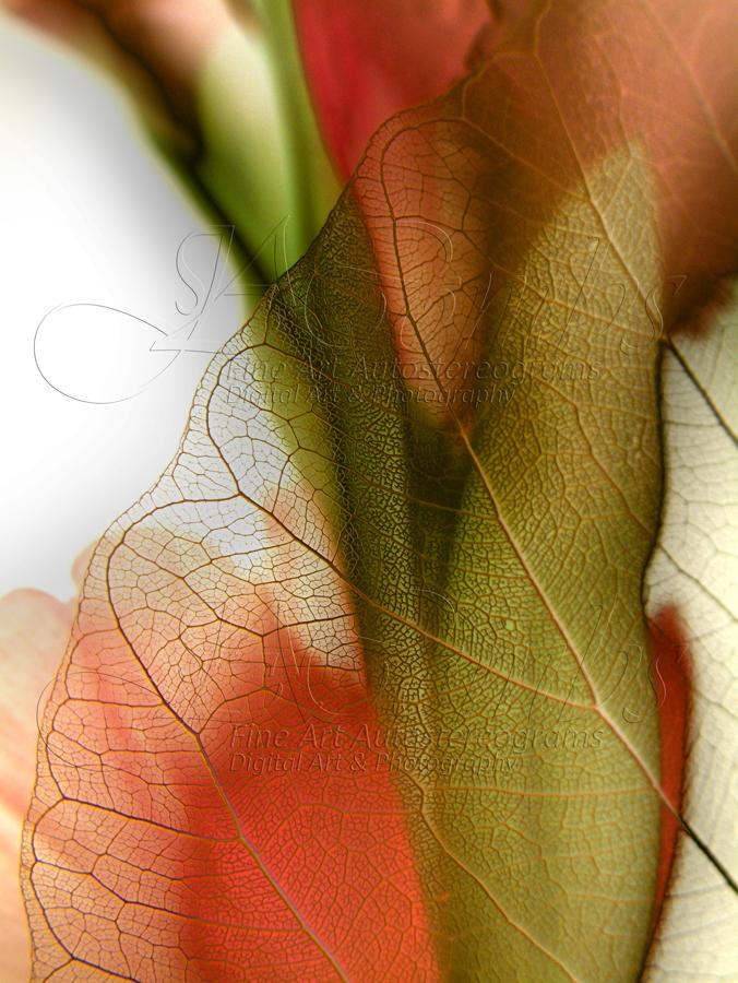 Still Life with Leaf & Gladiola