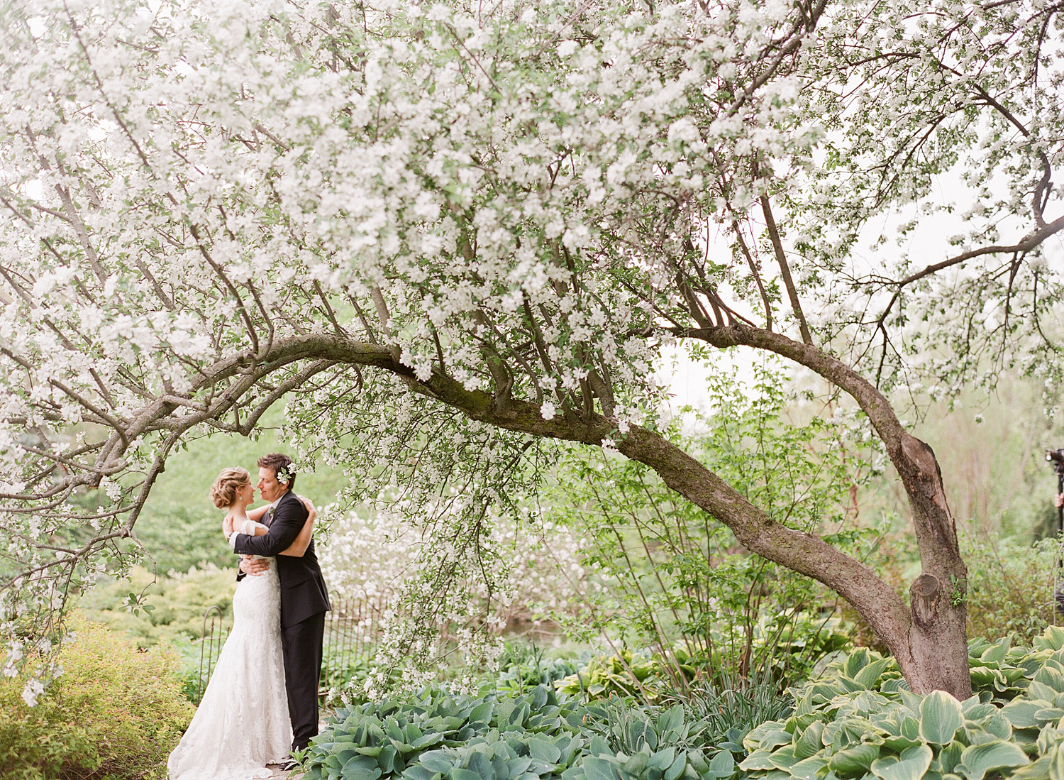 bride and groom have their first look under the blooming trees at their wedding at Northwind Perennial Garden in wisconsin while Destination wedding photographer shoots their wedding on film.