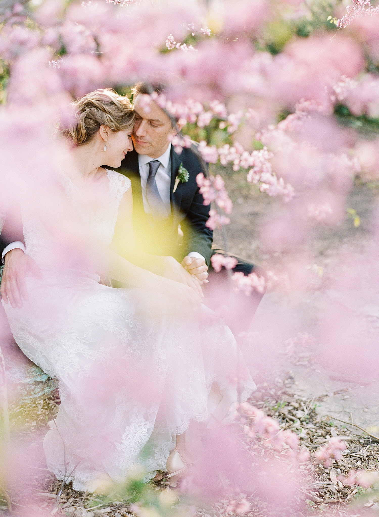 bride and groom kiss through the pink springtime blooms at this springtime wedding at Northwind Perennial Garden - a beautiful wisconsin wedding venue - while Destination wedding photographer Lexia Frank Photographs this wedding on film