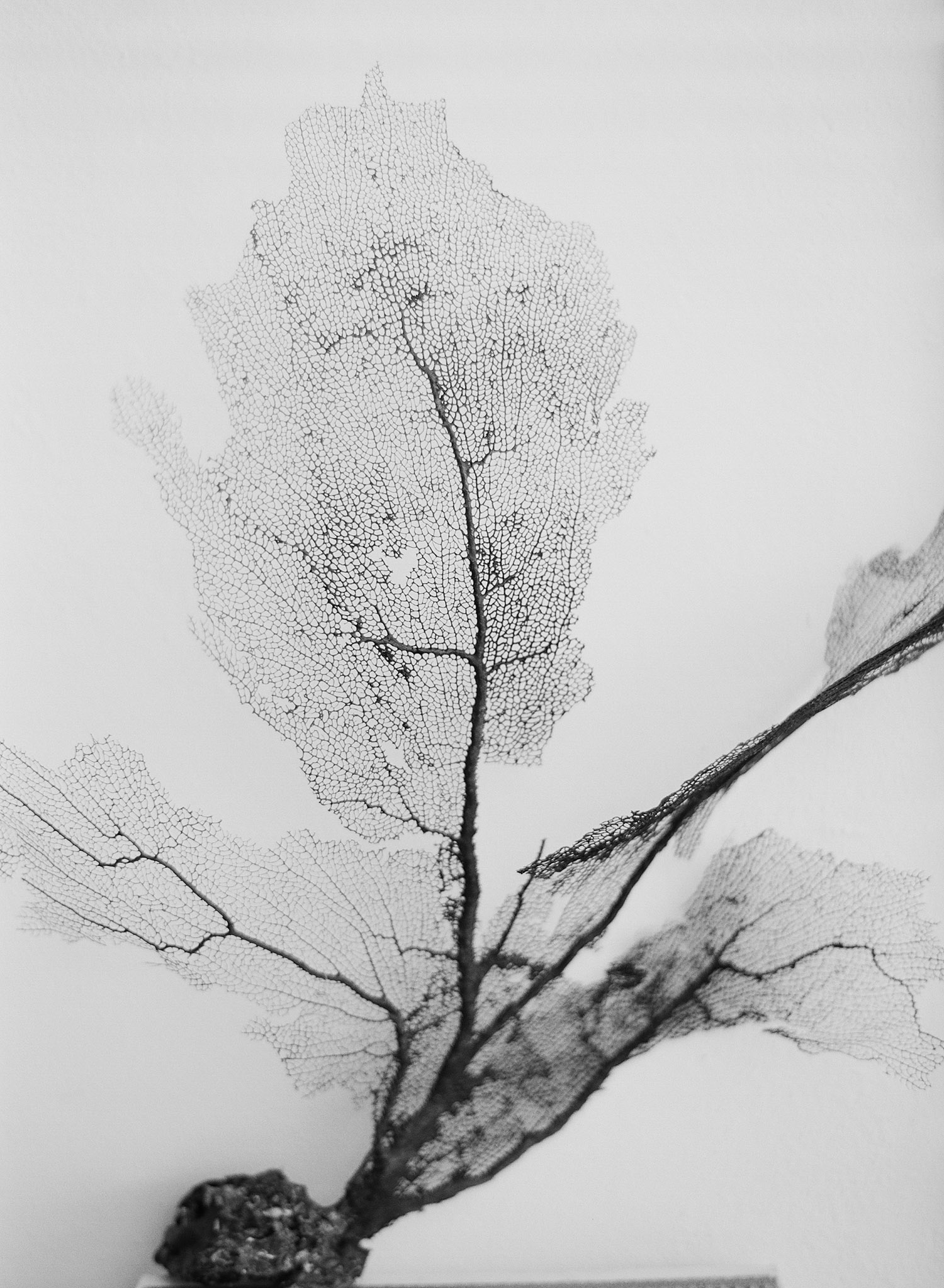 black and white image of sea fan at this destination wedding at the W hotel in Vieques Island, while Destination wedding photographer Lexia Frank photographs this destination wedding in vieques on film, as she is a film photographer