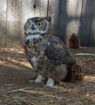 Lake Tahoe Wildlife Care to Expand / Tahoe Quarterly / November, 2014