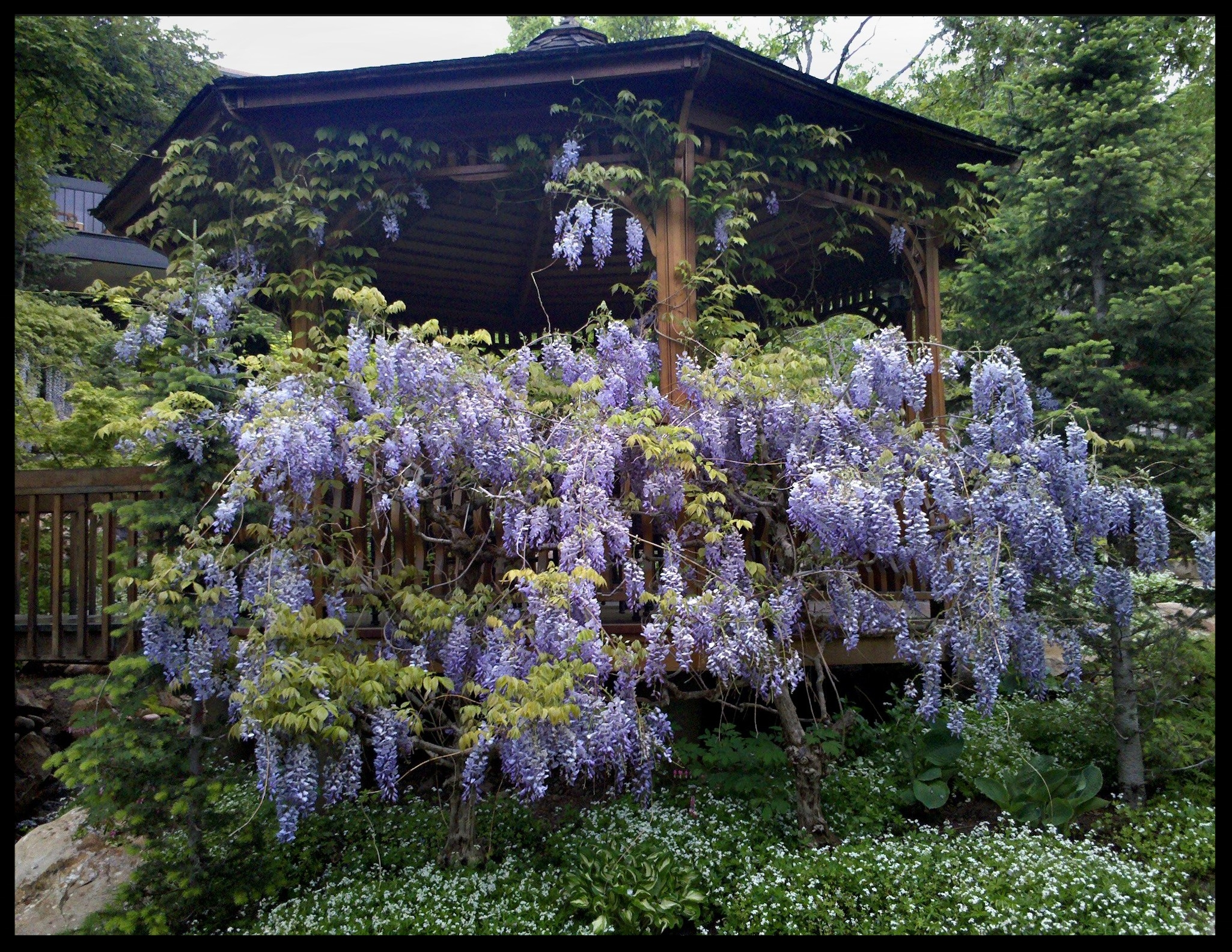Pendleton Design Management Gallery_40_wisteria.JPG