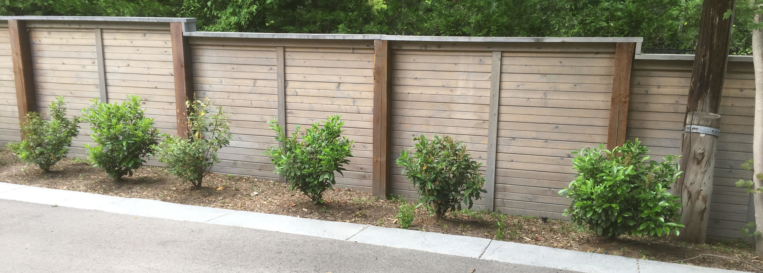 Can you guess which shrubs were treated with Carbon One and which were not?