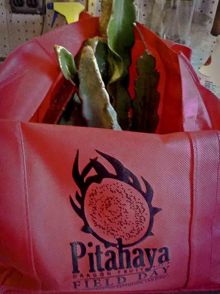 Pitahaya Bag.jpg