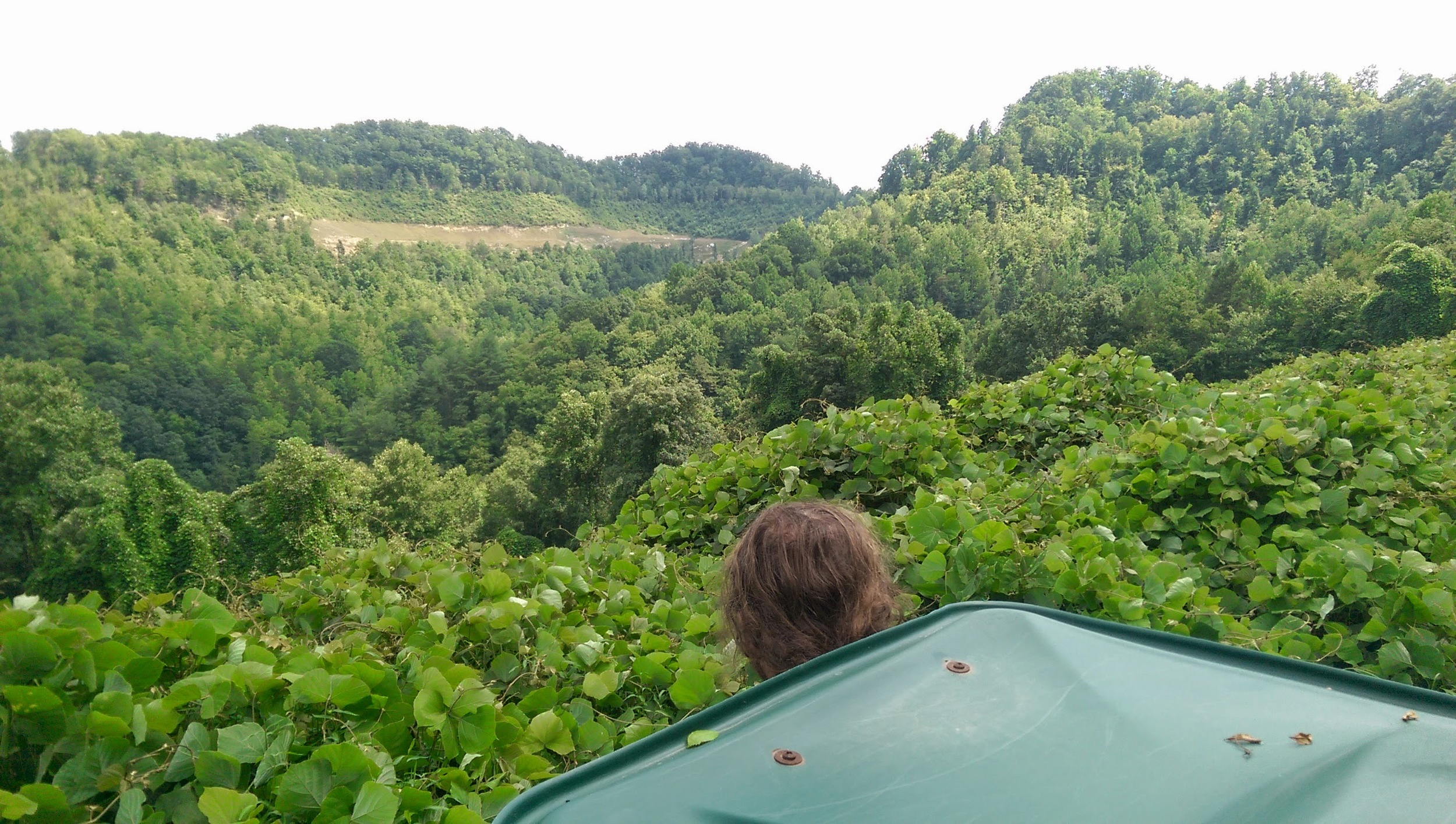 A kudzu vine covered hill side overlooking the Browns Fork section of Hazard, KY . Photo by: Gerry Seavo
