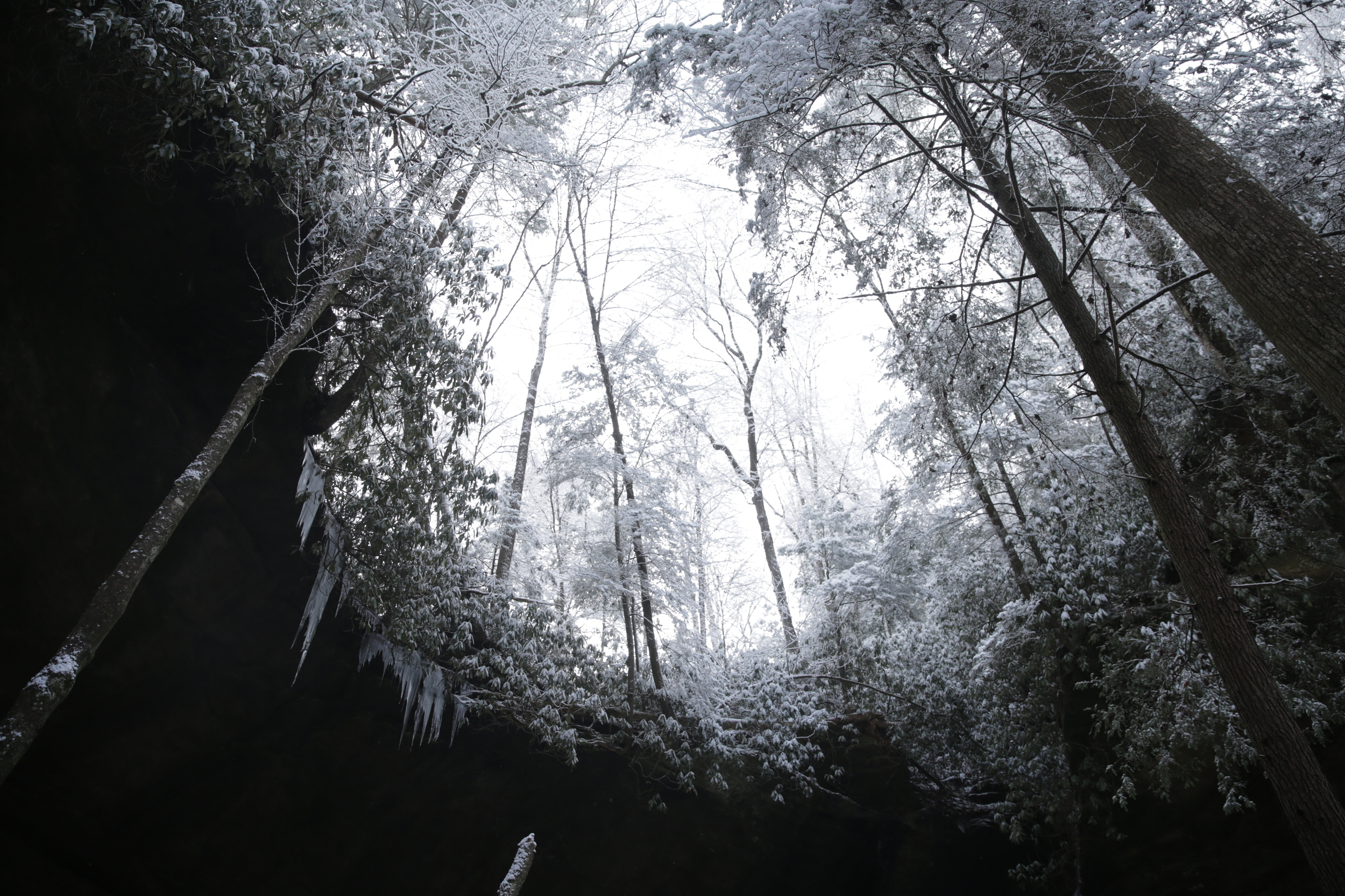 Trees, earth, ice, and sky.  Photo by Nate Spicer