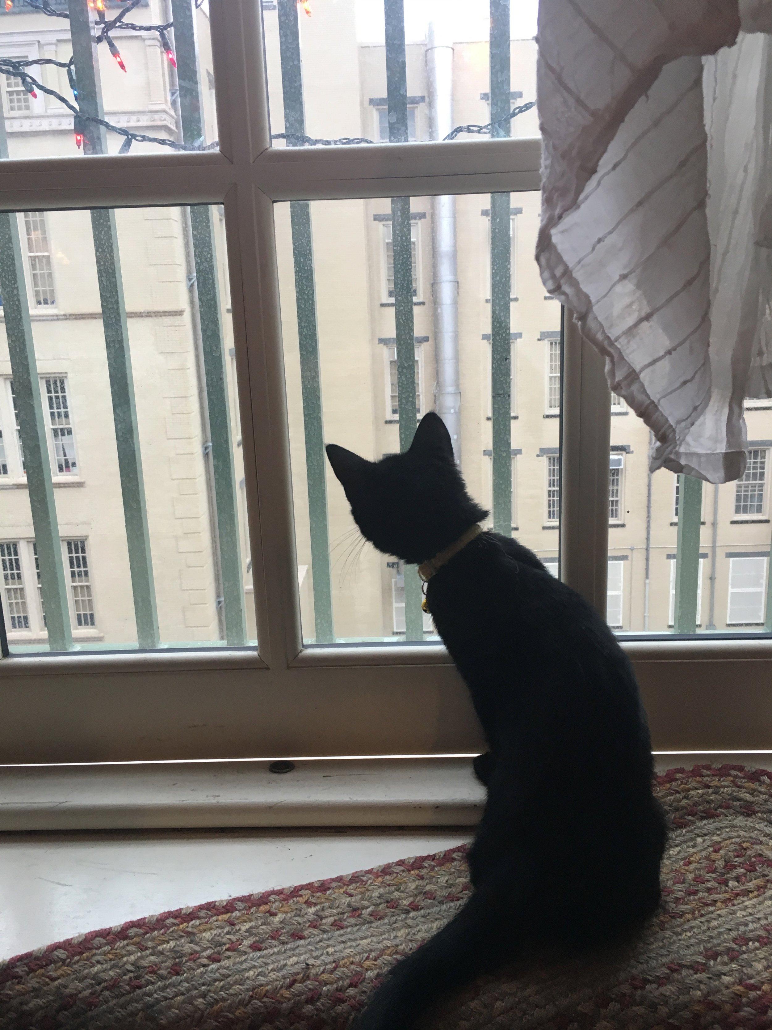 Cat at the Window.jpg