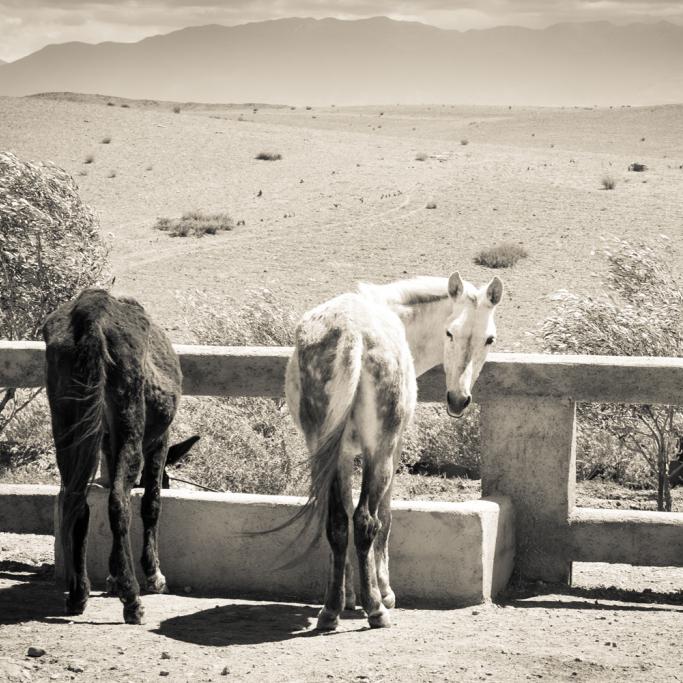 Jarjeer Mule and Donkey Rescue Morocco