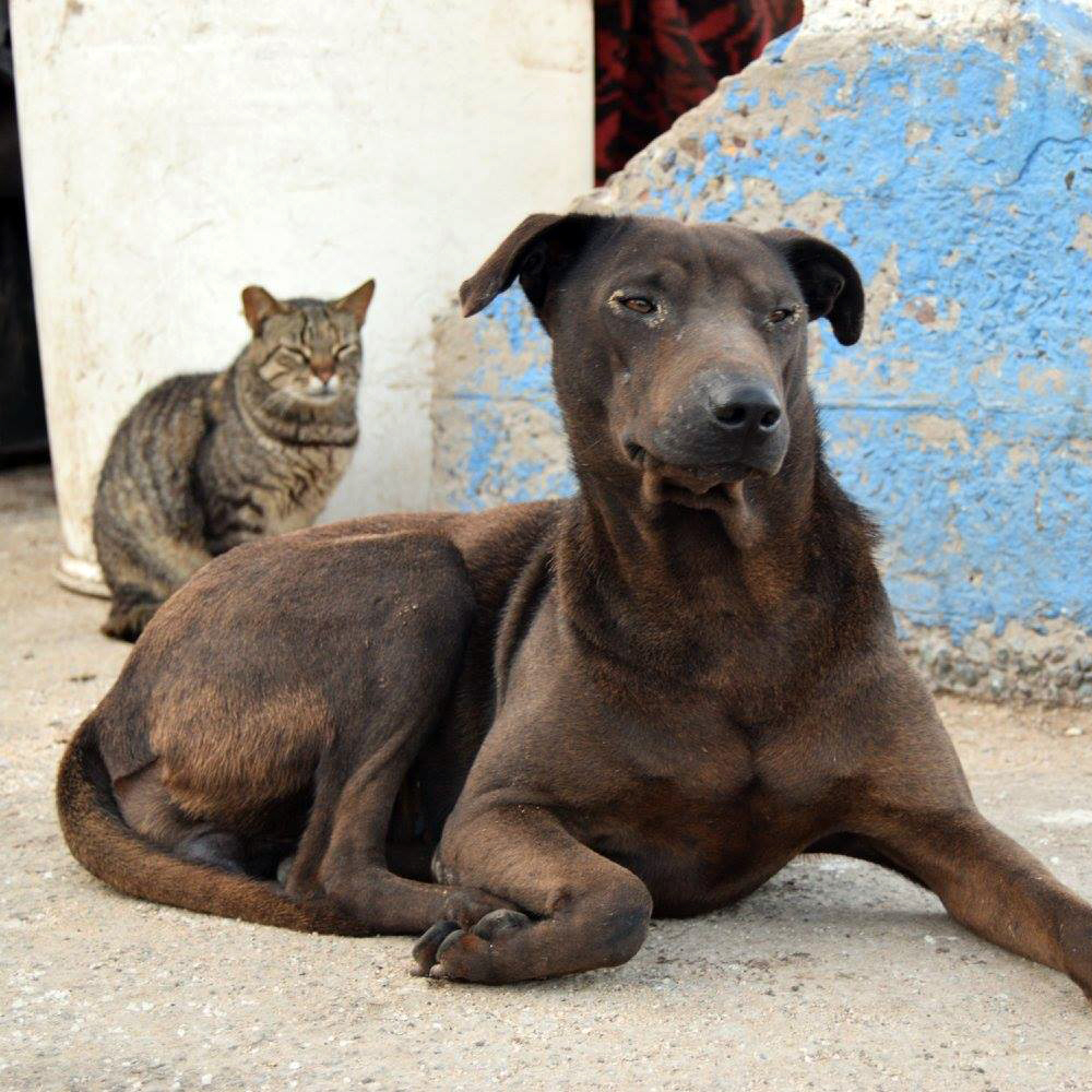 Help the Street Animals of Morocco