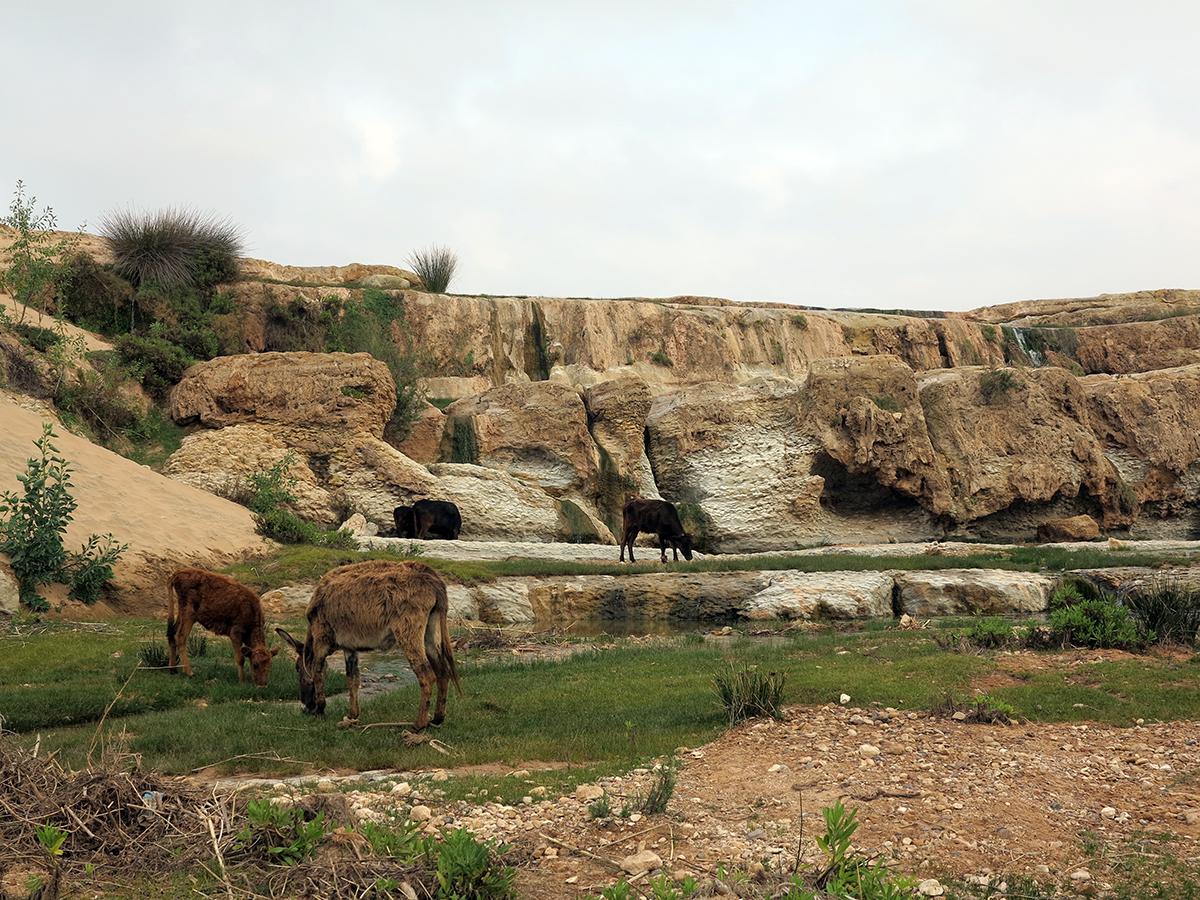 kaouki-farm-waterfall.jpg