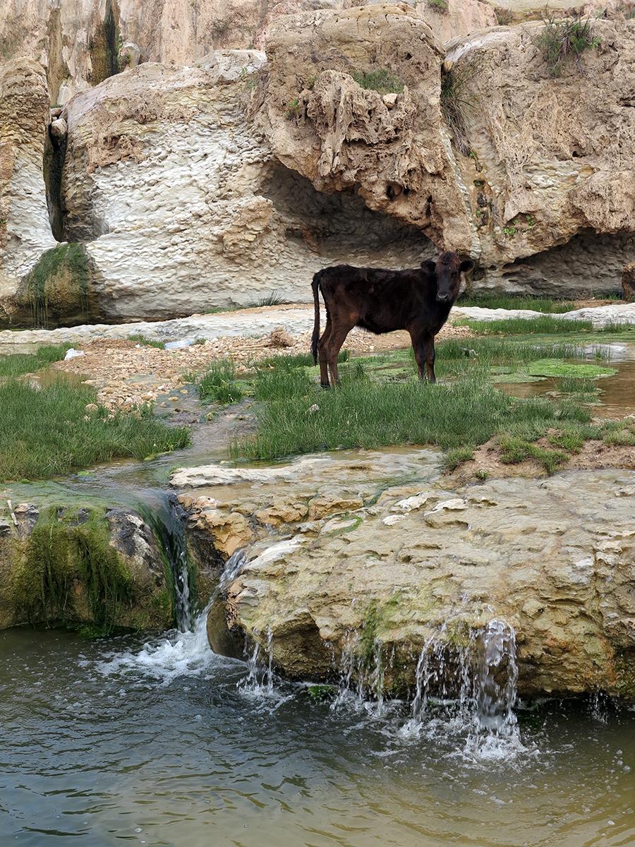 kaouki-waterfall-calf.jpg