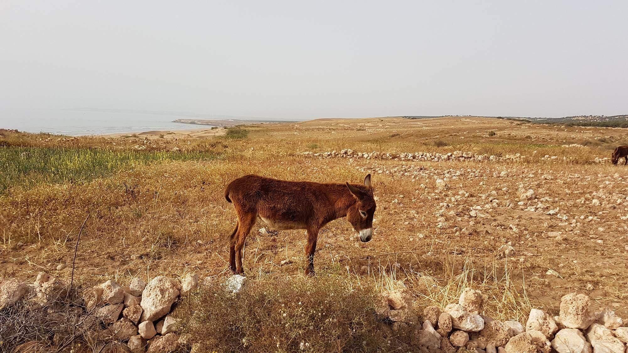 mo-bedouin-camp-kaouki-sarahgriffin2.jpg