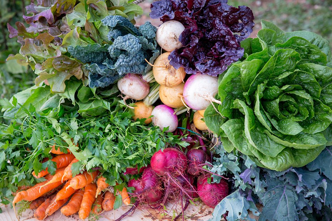 bbio-organic-veg-essaouira.jpg