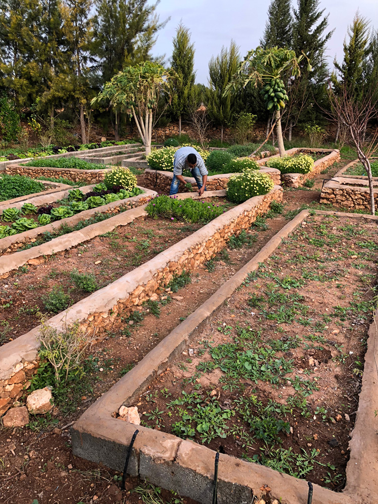 bbio-organic-farm-essaouira.jpg