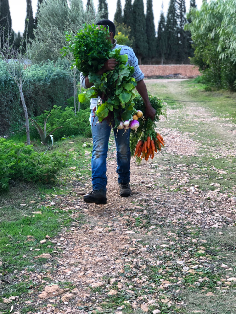 bbio-organic-farmer.jpg