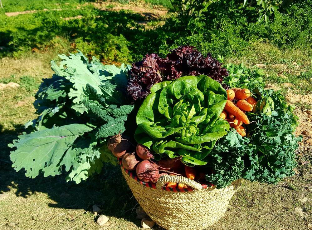 bbio-organic-welcome-basket.jpg