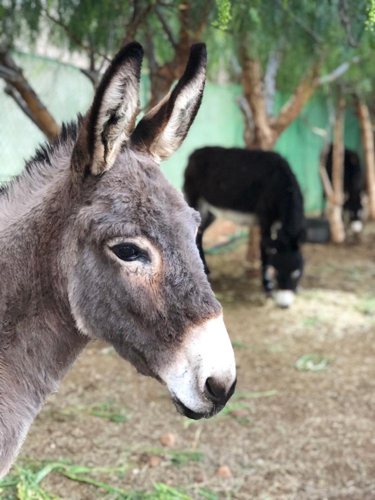 moroccan-donkeys.jpg