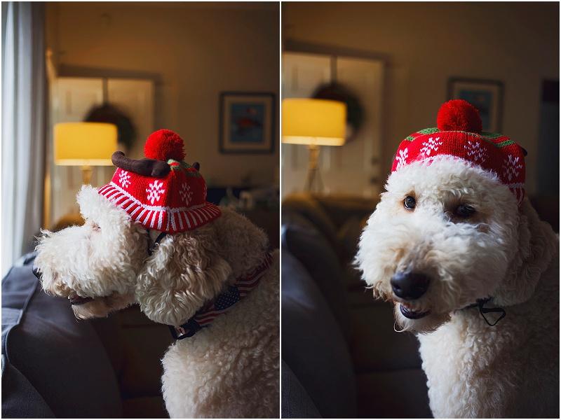 at home christmas photos orlando lifestyle photographer (2).jpg