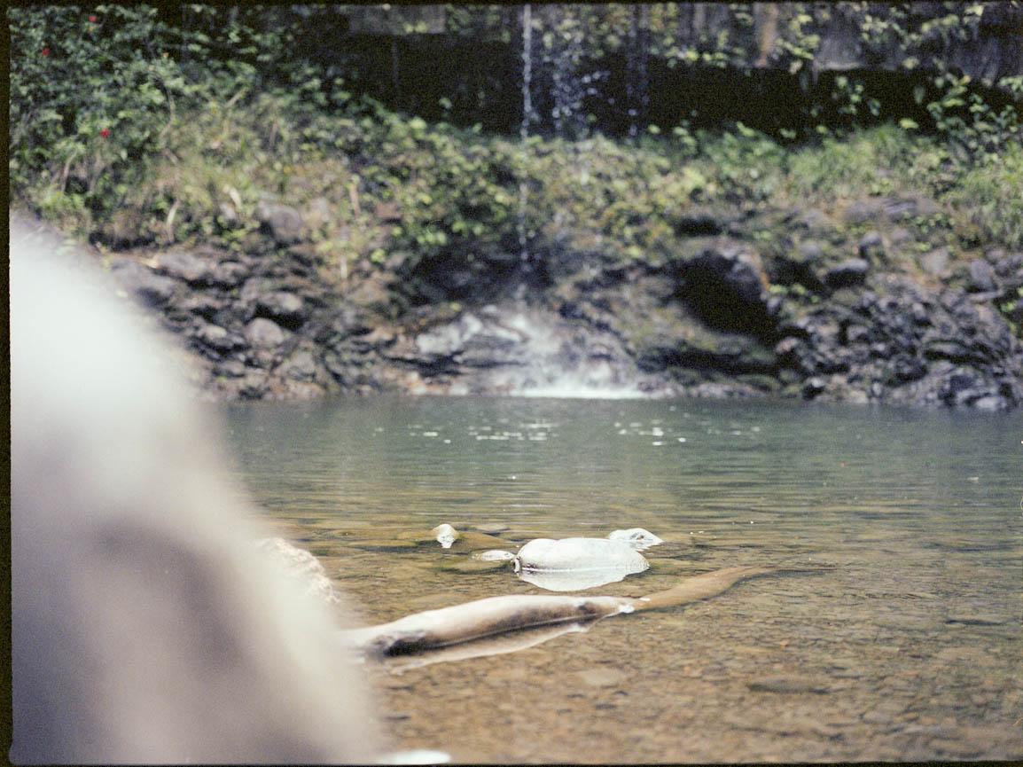 hawaii on film-8.jpg