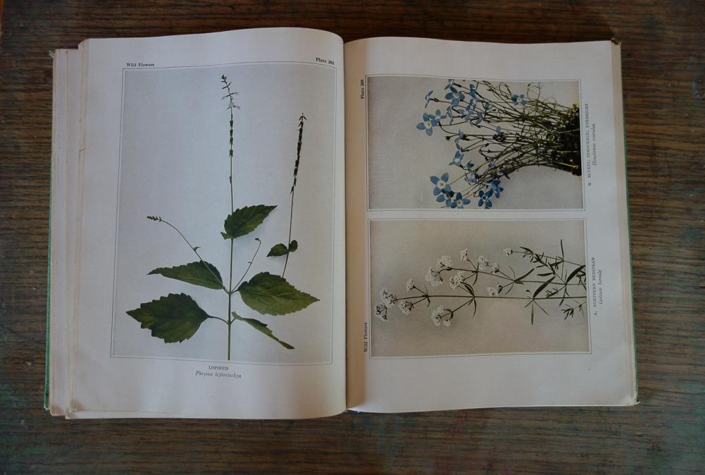botany book detail
