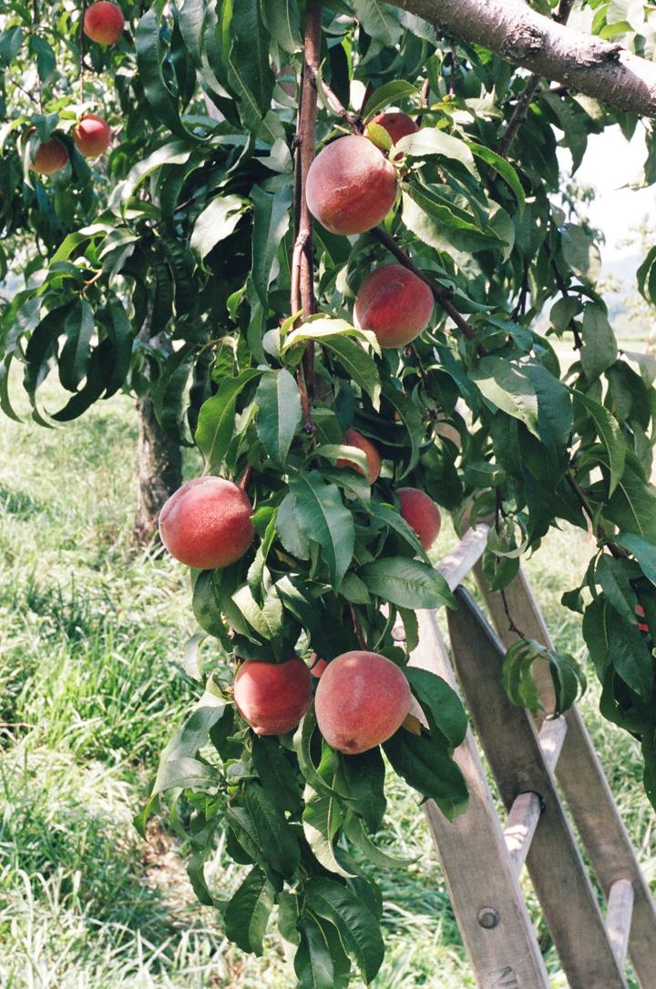 straight-up peach pie | apt 2b baking co