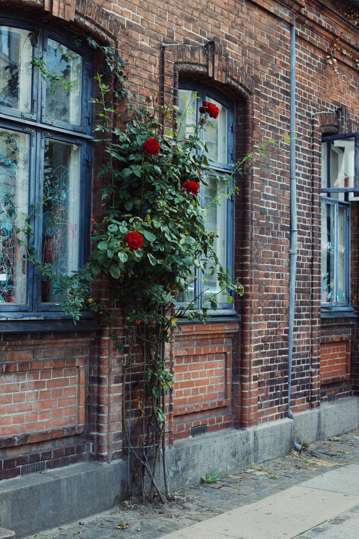 copenhagen-0356.jpg