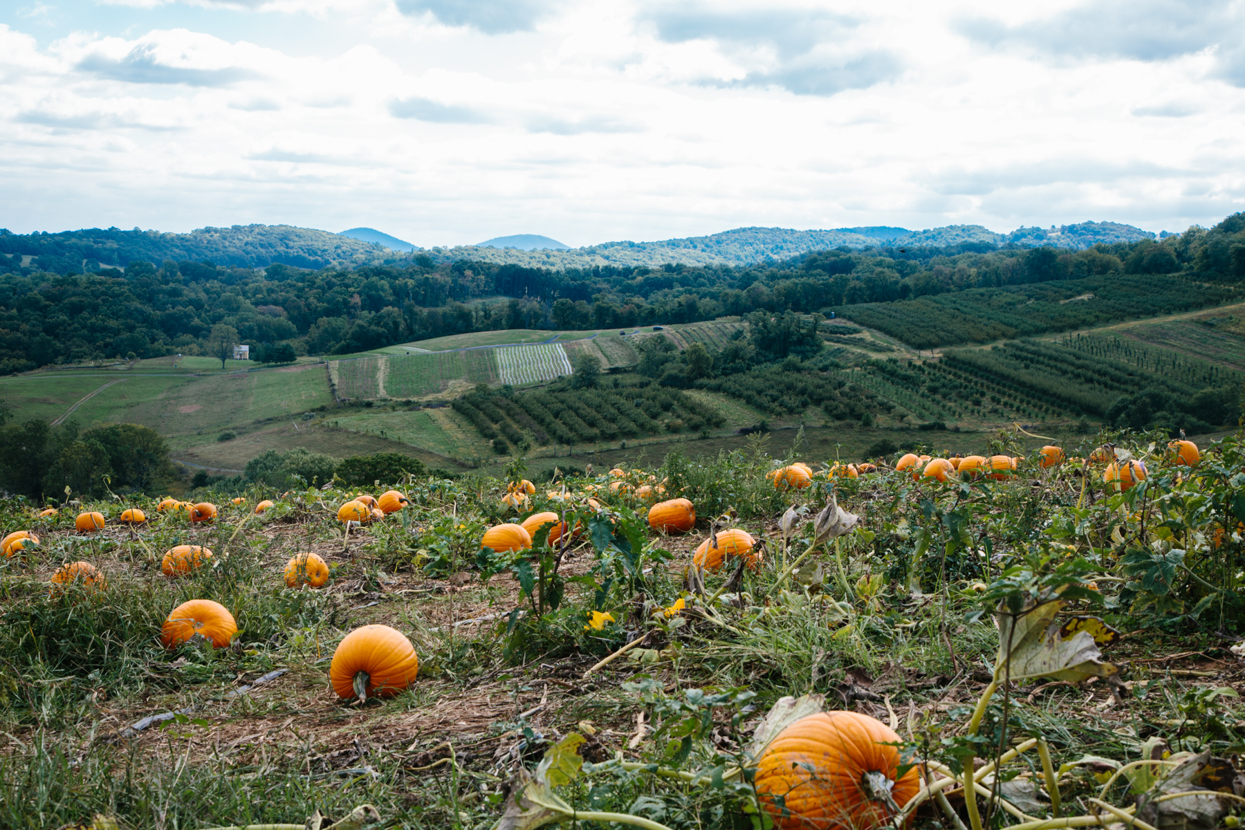pumpkin patch virginia | apt 2b baking co