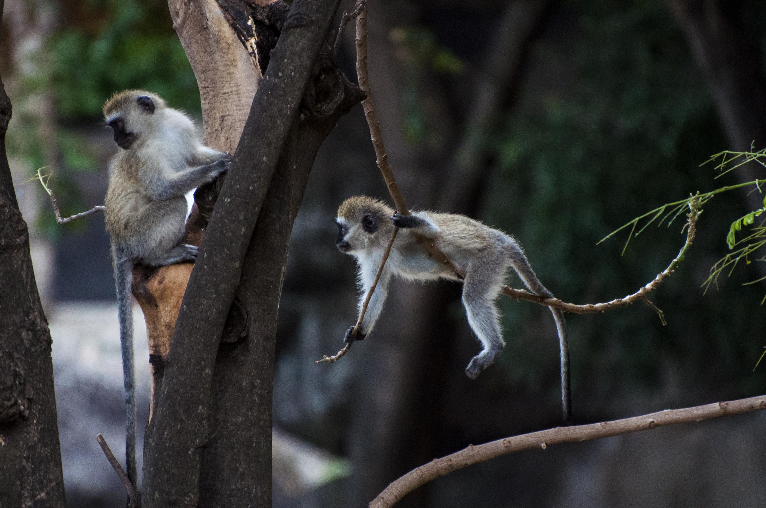 monkeymonkey.jpg